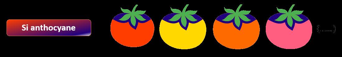 Gène-tomate-3